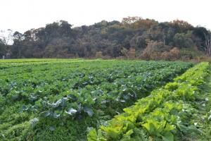 農園の代表たち(野菜)